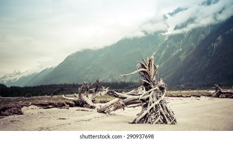 Large tree root balls washed up on a beach in Tayasanka inlet in Southeast Alaska on a cloudy summer day processed with vintage coloration.
