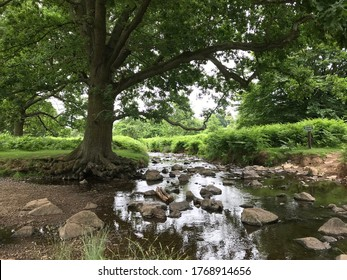 A large tree spans over a small stream flowing through a number of stones