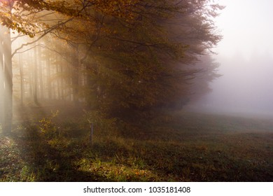 A large tree stands at the edge of the woods surrounded by misty early-morning sunlight