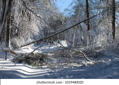Large tree and storm damage because of a winter storm