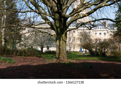 Large tree with strong branches casting a shadow on the ground