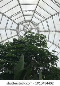 Large tree and transparent roof.