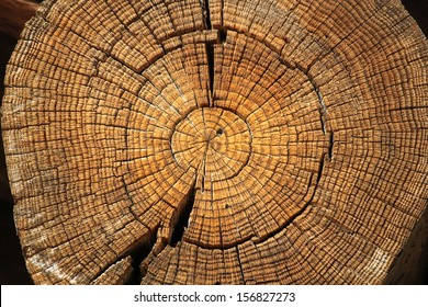 A large tree trunk