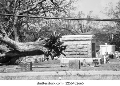 Large tree uprooted by Hurricane Katrina in a Biloxi, MS. Cemetery. Taken on August 15, 2005.