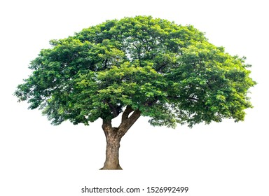 Large trees with edible fruits are completely separated from the white background.