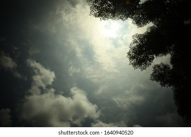 Large trees silhouetted against dark blue and grey sky
