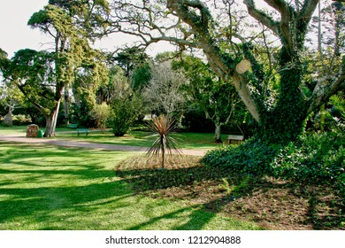 Large Tropical garden with benches to go and relax under huge trees for shade and peace