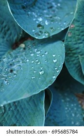 Large tropical leaves with raindrops close-up