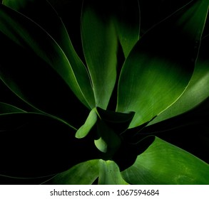 large tropical plant in the shadows