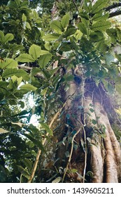 Large tropical tree surrounded by lush greenery