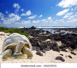 Large turtle (Megalochelys gigantea) at the sea edge on background of a tropical landscape.