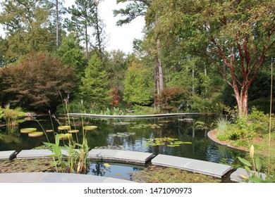 A large two tiered pond filled with various water lily pads and water plants surrounded by forest in Durham, North Carolina, USA