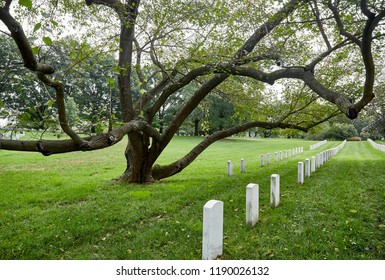 A large unusual tree in a cemetery