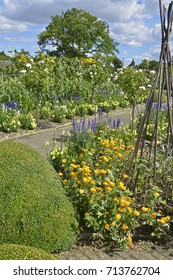 A large vegetable garden with mixed planting of vegetables and flowers including Salvia, marigolds and Antirrhinums