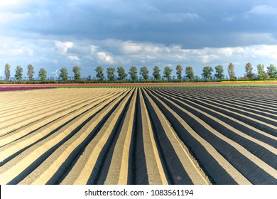 Large view on the brown field with rows