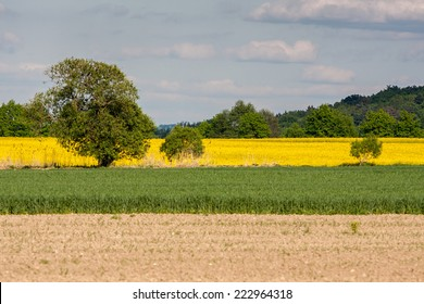 Large view at the yellow colza field