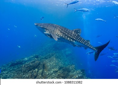Sharks in Shallow Water Images, Stock Photos & Vectors