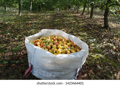large white bag full of apples in the middle of the forest