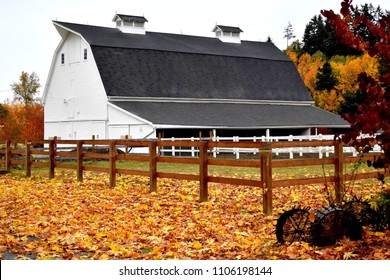 Large White Barn and Autumn Leaves