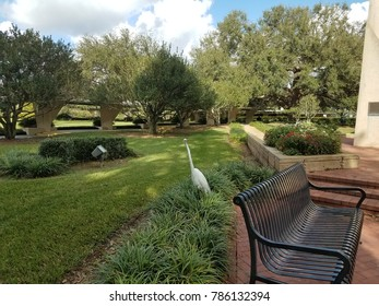 large white crane bird with long neck near grass and bench