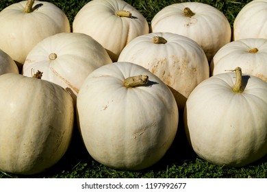 Large white decorative pumpkins for sale at a fall festival in Indiana