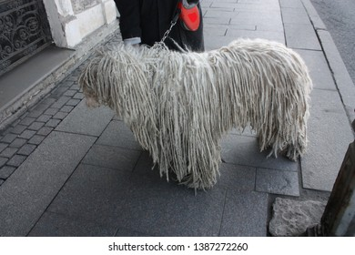 large white dog with dreadlocks