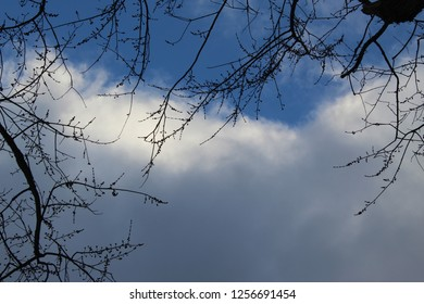 Large white and gray billowy clouds with deep blue sky and tree branches along the top and side