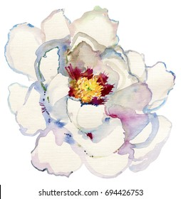 large white peony on a white background. Watercolor illustration.