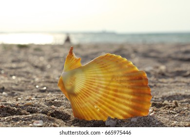 large white shell with a pearl inside lying on the sand of the sea