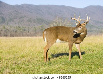 A large whitetail deer buck makes its way through a green, grassy meadow with mountains