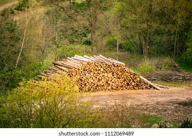 Large woodstack in a forest surrounded by trees in the spring