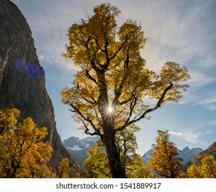 Large yellow maple tree, in front of a green one, against the  Baerenwand on the left, in the Ahornboden Valley, Austria