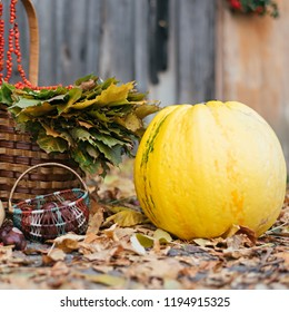 a large yellow pumpkin near to a small basket of chestnuts and a
