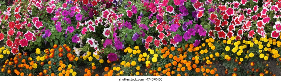 large-format panorama of flowers