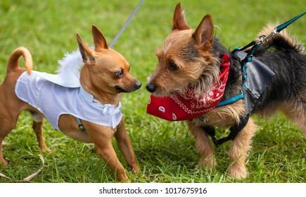 "LAS PALMAS DE GRAN CANARIA, SPAIN - FEBRUARY 04: Spectators and participants enjoy ""Carnaval canino"", Dogs' carnival day in Santa Catalina Park, February 04, 2018 in Las Palmas de Gran Canaria, Spain"