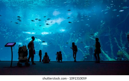 LAS PALMAS DE GRAN CANARIA, SPAIN - May 12: Visitors enjoy beautiful view of marine life in the biggest tank of new Aquarium Poema del Mar, on May 12, 2018 in Las Palmas de Gran Canaria, Spain