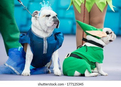 LAS PALMAS - FEBRUARY 16: Bulldogs dressed as princess and Peter Pan and from Canary Islands, onstage during the Carnival's Dogs Contest February 16, 2014 in Las Palmas, Spain