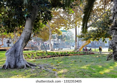 Las Palmas,Gran Canaria,02.09.2019 .Beautiful view of the San Telmo park with a beautiful Ficus tree in focus.Excellent spot to relax near the bus station.