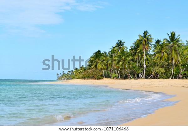 Las Terrenas Dominican Republic April  2018:Beautiful seascape Atlantic ocean calm waves on a sandy beach with palm trees.