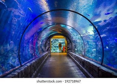 LAS VEGAS - MAY 12 : The Shark Reef Aquarium at Mandalay Bay hotel and casino in Las Vegas on May 12 , 2014. The Shark Reef Aquarium is comprised of nearly 1.6 million gallons of water.