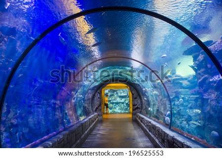 las vegas may 12 shark reef stock photo edit now 196525553