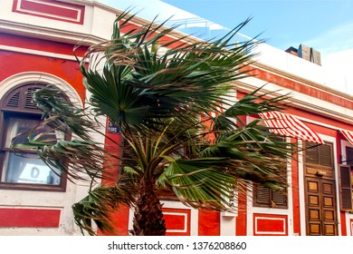 Las-Palmas de Gran Canaria, Spain, on January 10, 2018. A palm tree on wind against the background of a facade of the building characteristic of architecture of the archipelago.