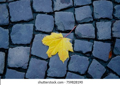 Last autumn leaf (bright yellow maple leaf) on an old stone pavement, top view