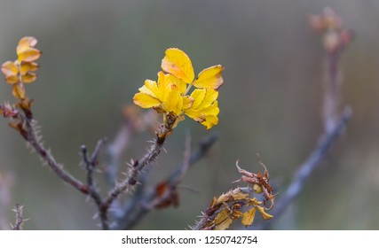 The last leaves for this fall on a dog rose