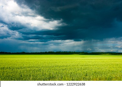 Last rays of sunlight over a crop field before a massive vernal thunderstorm arrives, South Friuli, Italy