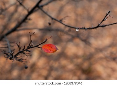The last red leaf in wet autumn park after rain background