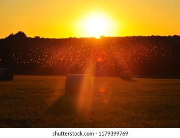 last sunbeams of late summer sunset