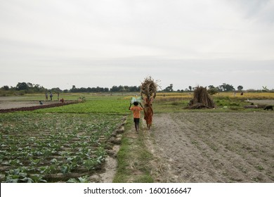 Lataguri, West Bengal / India - November 9, 2019: Farmers daily life in a remote village of West Bengal, India. This country still has huge number of farmers who are struggling with poverty