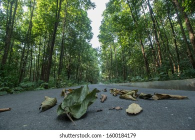 Lataguri, West Bengal / India - November 9, 2019: A beautiful landscape photograph of a forest road in West Bengal