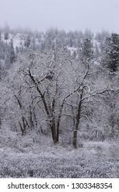 Latah creek winter scene